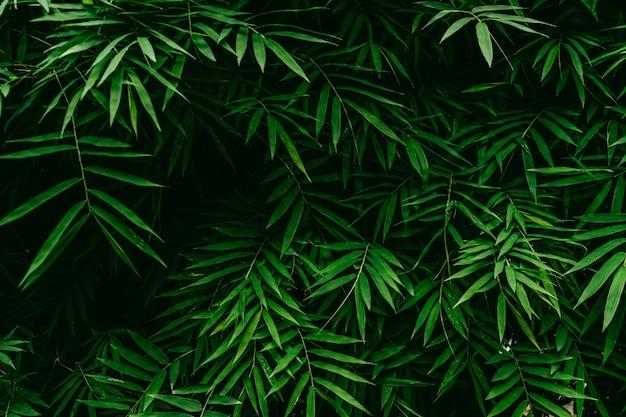 Priorità bassa di struttura di foglia di bambù