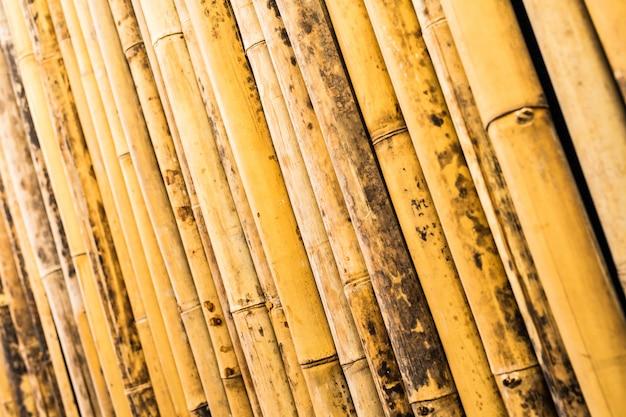 Backgroung di bambù del modello di struttura