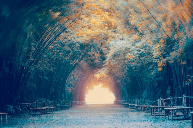 Tunnel di bambù a nakhon nayok, thailandia