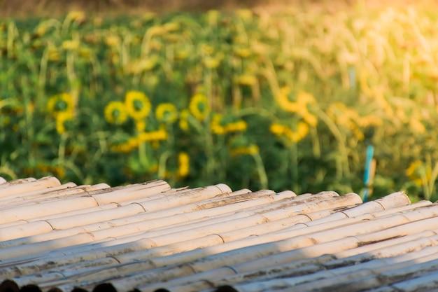 Passerella di bambù e sfondo del campo di girasoli