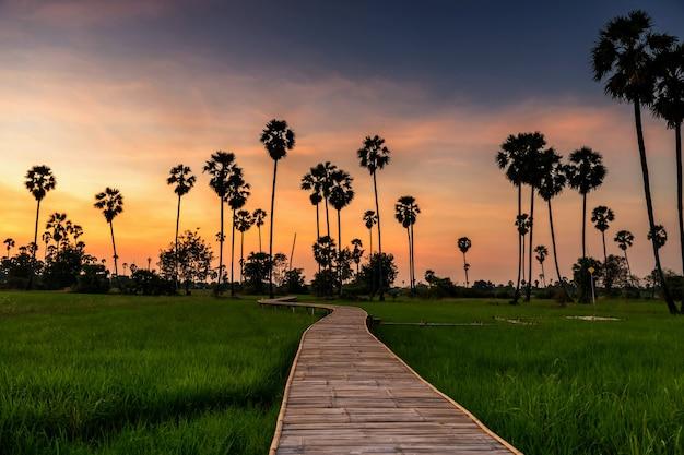 Sentiero pedonale curvo in legno di bambù sentiero a piedi del campo di risaia e palma da zucchero al tramonto con il cielo al crepuscolo, pathum thani, thailandia. famosa destinazione di viaggio naturale nel paese tropicale.