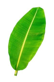 Foglia di banana, foglie verdi, isolati su sfondo bianco, tracciati di ritaglio