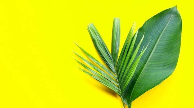 Foglia di banana con foglia di palma tropicale su sfondo giallo. copia spazio