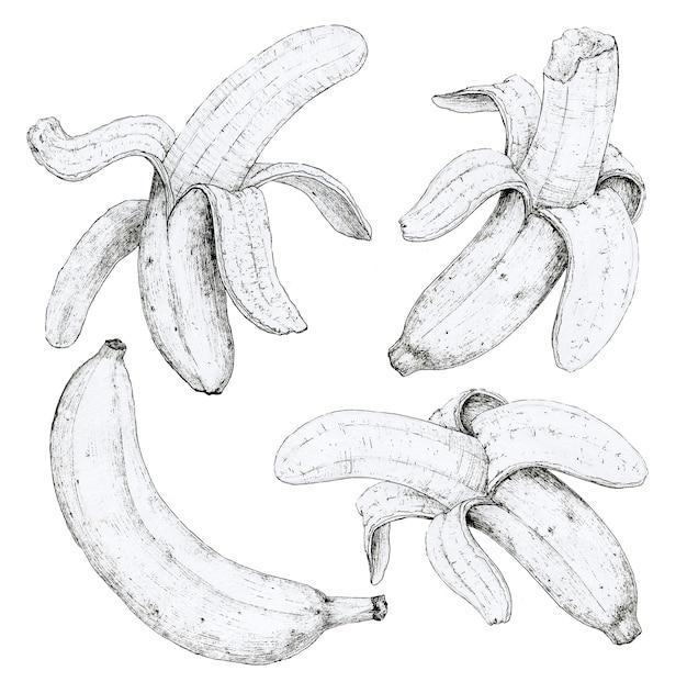 Banana impostato su uno sfondo bianco. disegno a mano. adatto per la progettazione del menu del ristorante caffetteria della cucina