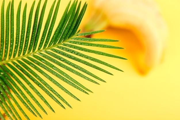 Banana con foglia di palma