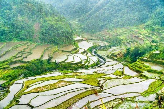 Terrazze di riso di banaue sotto la pioggia. isola di luzon, filippine ..