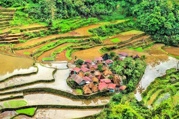 Terrazze di riso del bangaan - ifugao, isola di luzon, filippine