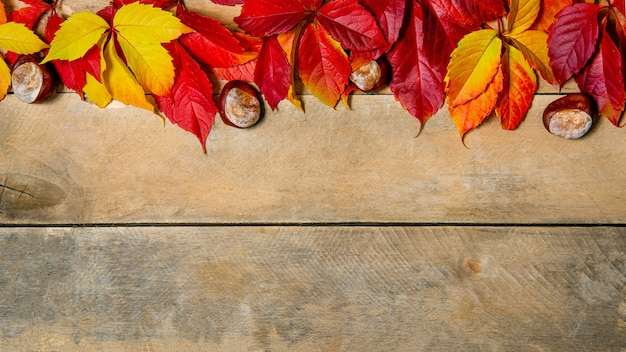 Banner. autunno brillante giallo-rosso foglie su uno sfondo di legno. con copia spazio. vista dall'alto.