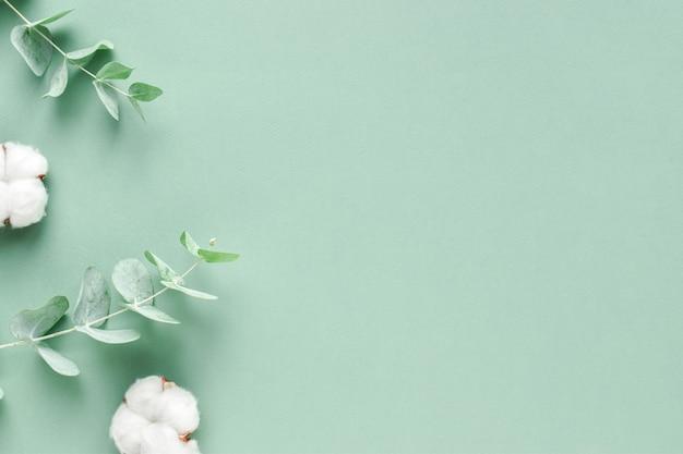Lo stendardo è un ramo di eucalipto e cotone. sfondo con piante. minimalismo. eco-cosmetici. layout piatto, vista dall'alto, un posto da copiare.