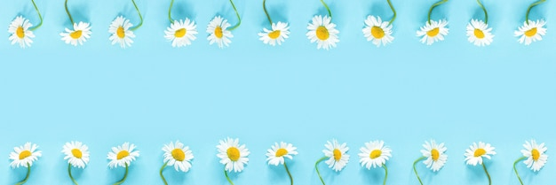 Banner realizzato da una fila di fiori di margherite di camomille bianche su sfondo di carta di colore blu pastello. copia spazio modello per il testo o il tuo design vista dall'alto piatta.