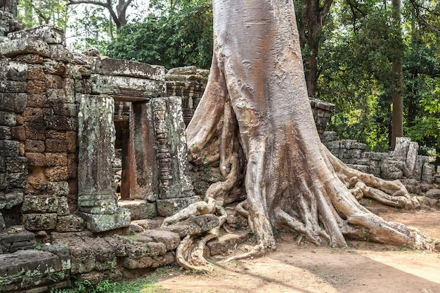 Tempio di banteay kdei in angkor wat a siem reap, cambogia