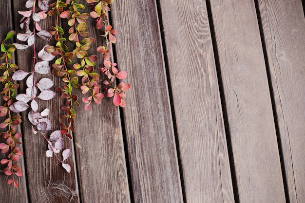 Rami di crespino su fondo in legno vecchio