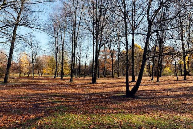 Alberi spogli che crescono nel parco di autunno alla fine dell'autunno, strada nebbiosa nuvolosa, alberi decidui spogli, campeggio