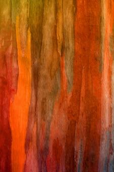 Corteccia di sfondo albero di eucalipto