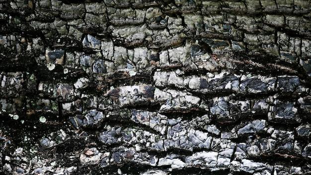 Corteccia di legno texture di sfondo, da vicino