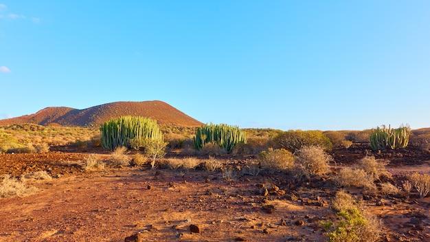 Paesaggio arido nel sud di tenerife al tramonto, isole canarie, spain