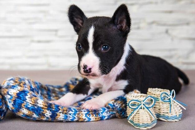 Basenji cucciolo di cane e cappello e stivali lavorati a maglia blu
