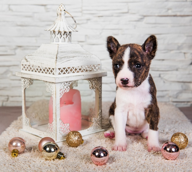 Basenji cucciolo di cane e lanterna con una candela