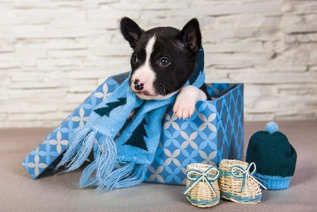 Cucciolo di cane basenji con sciarpa e stivali lavorati a maglia blu