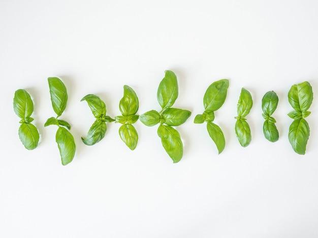 Modello di basilico isolato su sfondo bianco. cornice fatta di foglie di basilico. vista piana, vista dall'alto