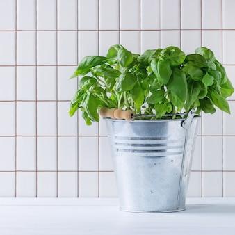 Basilico in vaso