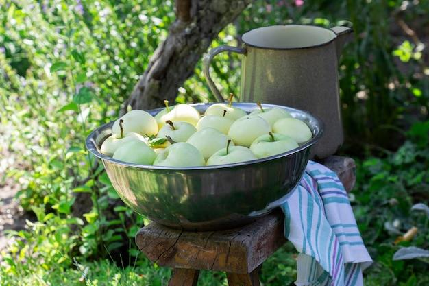 Una bacinella con acqua e mele sullo sfondo di un giardino estivo.