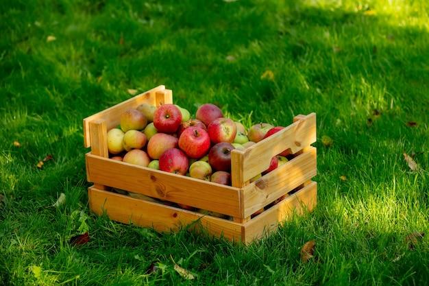 Cesto con mele sull'erba verde in giardino