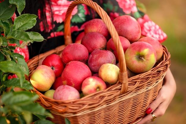 Cesto con mele in mano. primo piano delle mele rosse.