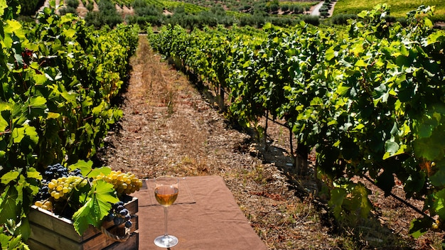 Cestino con grappoli d'uva in vigna con un bicchiere di vino