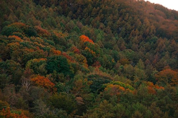 Foresta basca con colori autunnali.