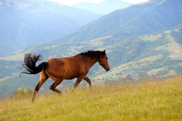 Il cavallo baio salta su un prato verde contro le montagne