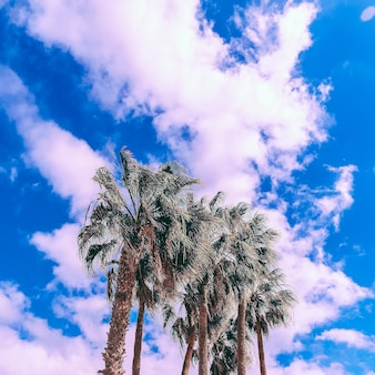 Beach palm mood fashion travel style isole canarie