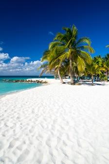 Spiaggia e palme