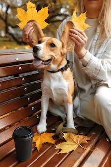 Beagle dog sitter sulle foglie d'autunno.
