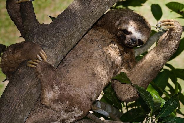 Orso bradipo selvaggio animale giungla