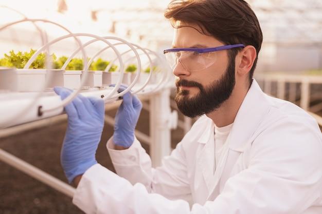 Uomo barbuto in guanti e occhiali di protezione che ispezionano i germogli sul tavolo idroponico mentre si lavora nella moderna serra