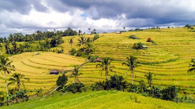 Beautifful campi di riso a bali. famoso per le risaie in asia.