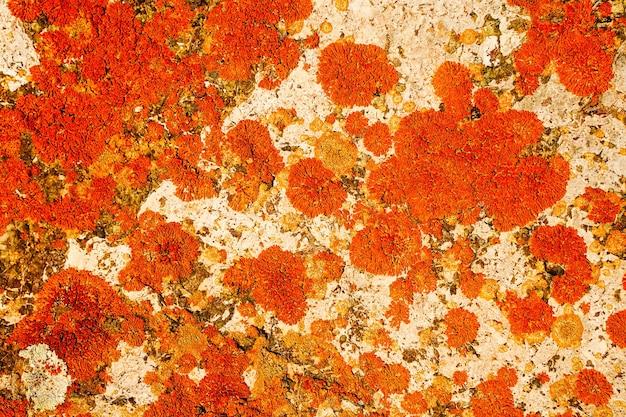 Bella trama colorata astratta per lo sfondo con muschio rosso su una pietra bianca di colore brillante...