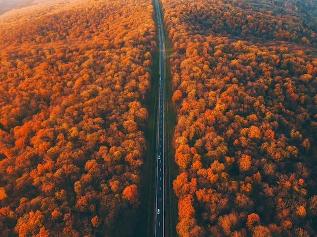 Bellissimo paesaggio aereo di strada forestale diritta, di montagna