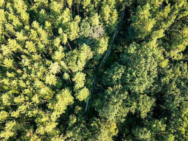 Bella vista aerea di un drone di bosco di latifoglie con una strada sterrata in una giornata estiva. concetto di conservazione della natura vista dall'alto