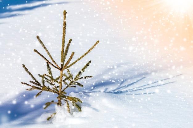 Bellissimo incredibile paesaggio di montagna invernale di natale. piccolo giovane abete verde abete che cresce da solo nella neve profonda in una fredda giornata di sole gelido su sfondo chiaro e luminoso colorato di fiocchi di neve copia spazio.