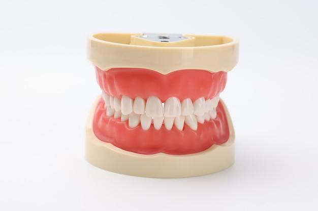 Bella mascella artificiale con concetto di mockup della mascella dei denti bianchi uniformi