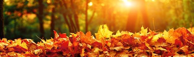 Bellissimo sfondo autunnale con foglie gialle e rosse.