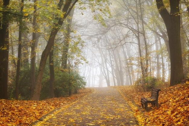 Bella foresta di autunno o paesaggio del parco cittadino e nebbia