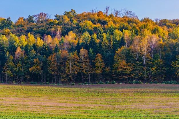 Bellissimo paesaggio autunnale della foresta con foglie verdi, rosse e gialle