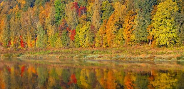 Bella foresta di autunno, molti alberi riflettono il panorama sull'acqua. concetto di autunno.