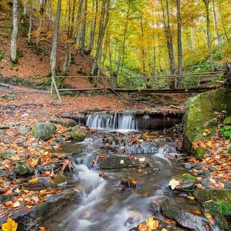 Bellissimo paesaggio autunnale con fiume nella foresta maestosa