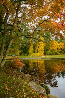 Bellissimo paesaggio autunnale nel parco botanico di palanga, lituania.