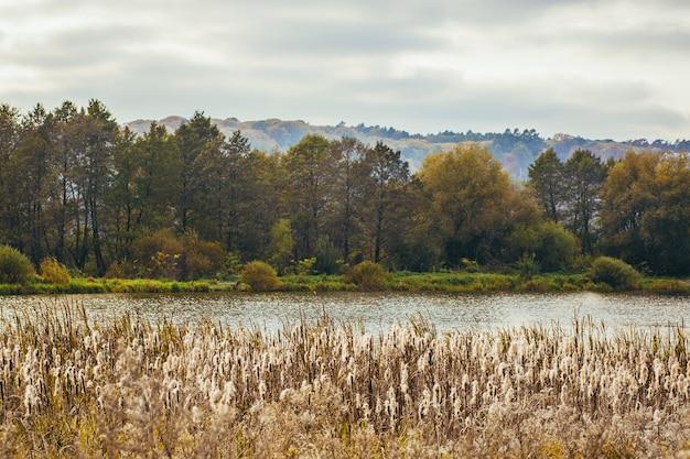 Bellissimo paesaggio autunnale della foresta e del lago con nebbia