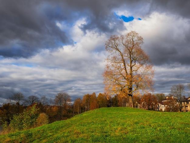Bellissimo paesaggio autunnale con cielo drammatico e albero senza foglie su una verde collina.